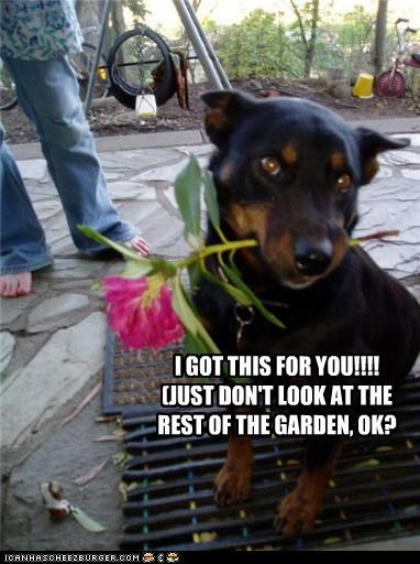 bribery caveat dont Flower for you garden look mess mixed breed please present rest rottweiler ruined warning - 4652505856