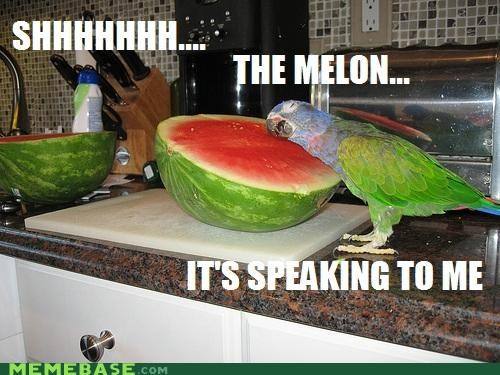 Memes,parrot,shh,speaking,watermelon