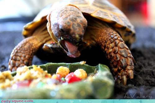 acting like animals cereal displeased do not want gross nomming noms tortoise - 4652751616