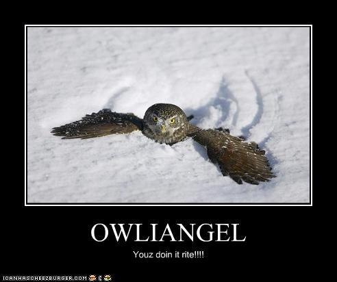 OWLIANGEL Youz doin it rite!!!!