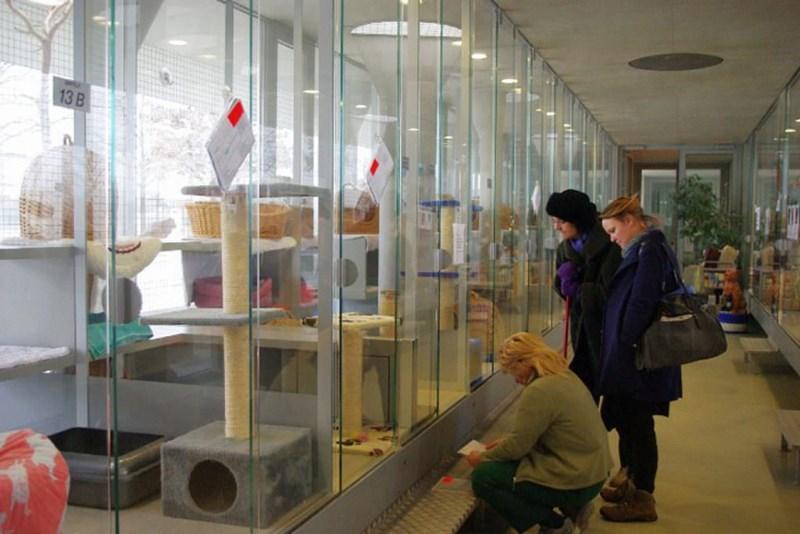 Germany animal shelter animals - 4652805