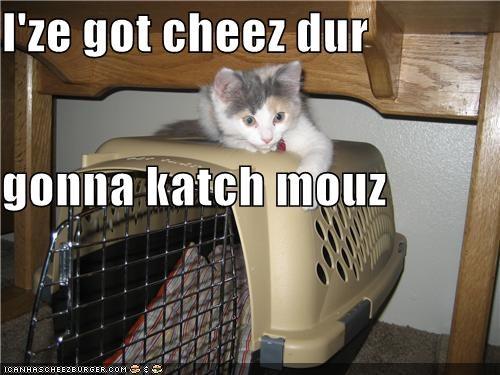 Cheezburger Image 4652970496