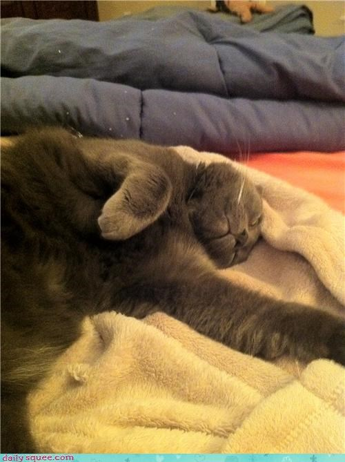 asleep cat do not want grace manners reader squees sleeping - 4653294592