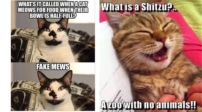 Horrible puns that involve animals or something like that