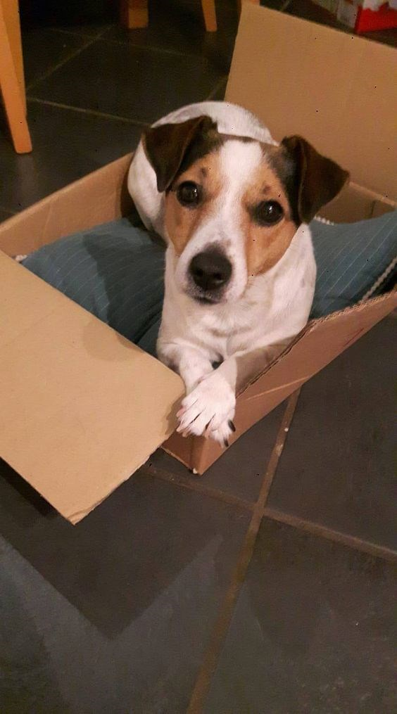 dogs boxes sitting funny - 4654085