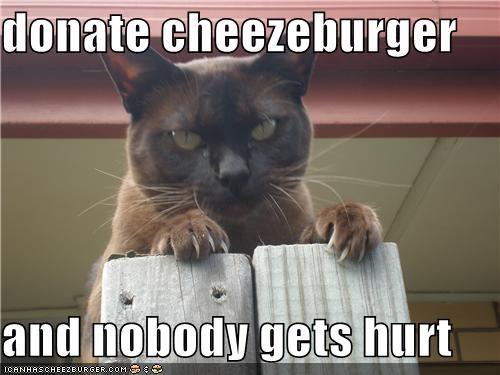 Cheezburger Image 4654126080