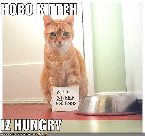 Cheezburger Image 4654389504