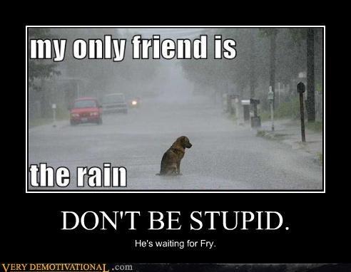 dogs futurama stupid - 4654442496