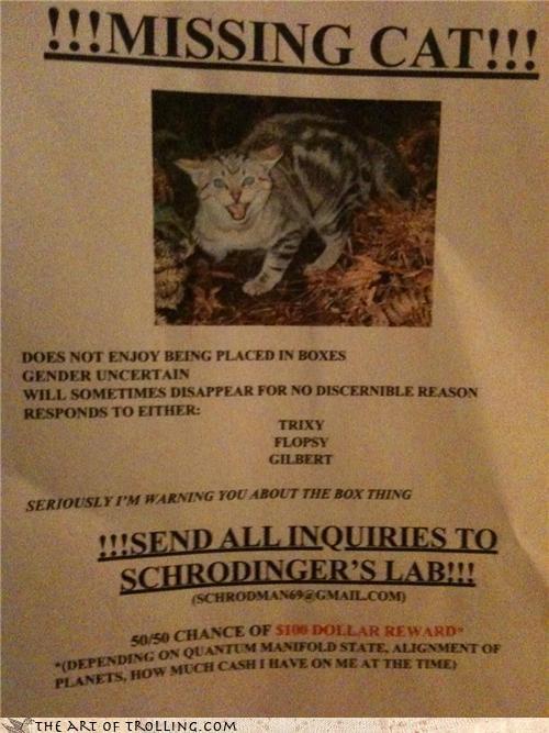 cat IRL lab poster shrödinger - 4654592512