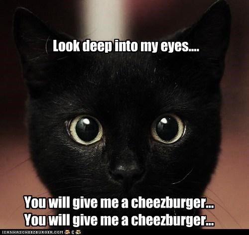 Cheezburger Image 4654617856