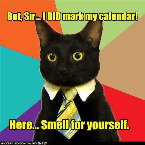 Business Cat,calendar,marking,smell