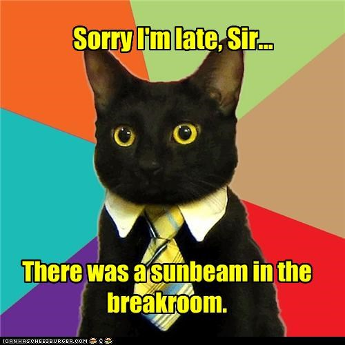 breakroom,Business Cat,guarding,late,sunbeam