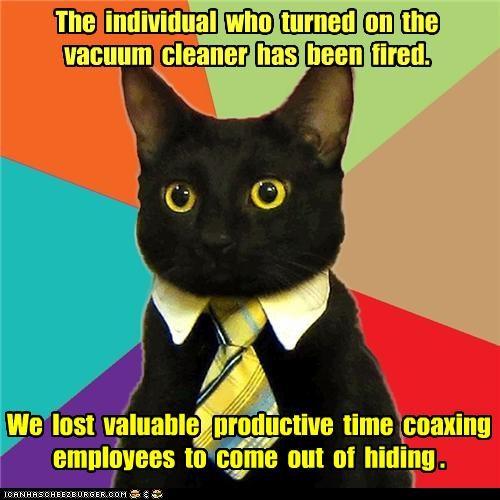 Business Cat cat fired vaccuum vroom - 4654819584