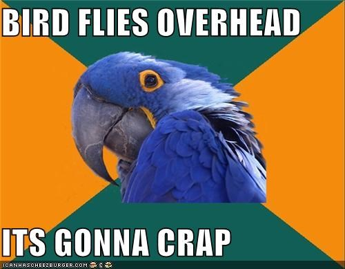animemes,bird,crap,duck,Paranoid Parrot,parrot,puns
