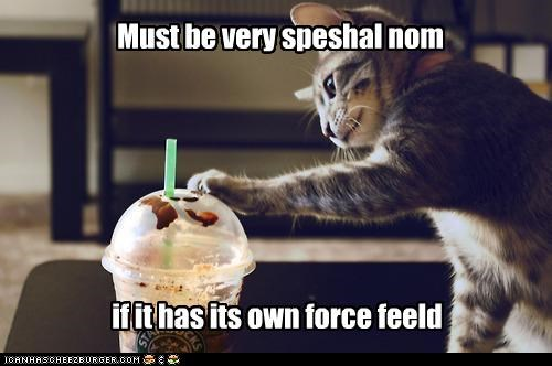 caption captioned cat coffee confused curious do want forcefield has lid nom observation observing own special very - 4654978560