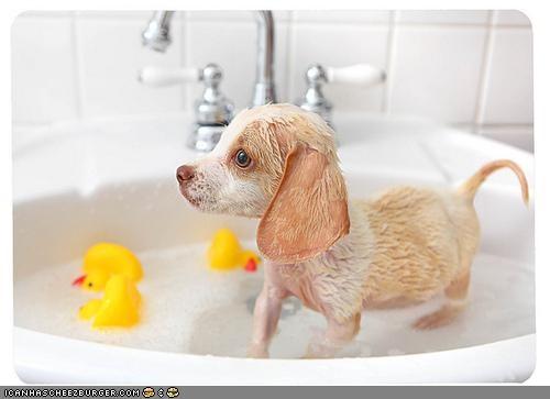 bath bathroom cyoot puppeh ob teh day duckies sink whatbreed