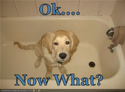 bath,bathtub,ignorant,labrador,now,ok,question,tub,what