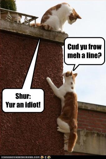 captioned cat Cats climbing idiot insult line literalism misinterpretation pun tabbies tabby