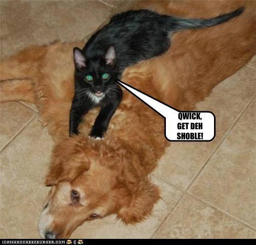 body cat Command get golden retriever passed out quick shovel - 4655600128
