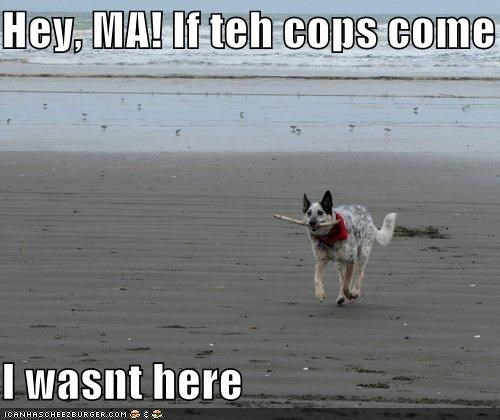 Hey, MA! If teh cops come I wasnt here