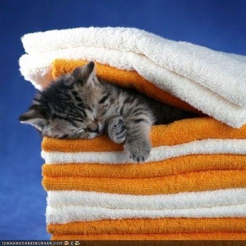 asleep,cyoot kitteh of teh day,maid,sleeping,towels
