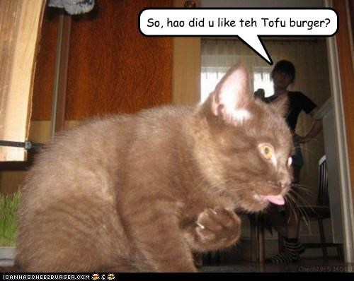 burger,caption,captioned,cat,do not want,how,kitten,like,mortified,noms,question,tasting,tofu