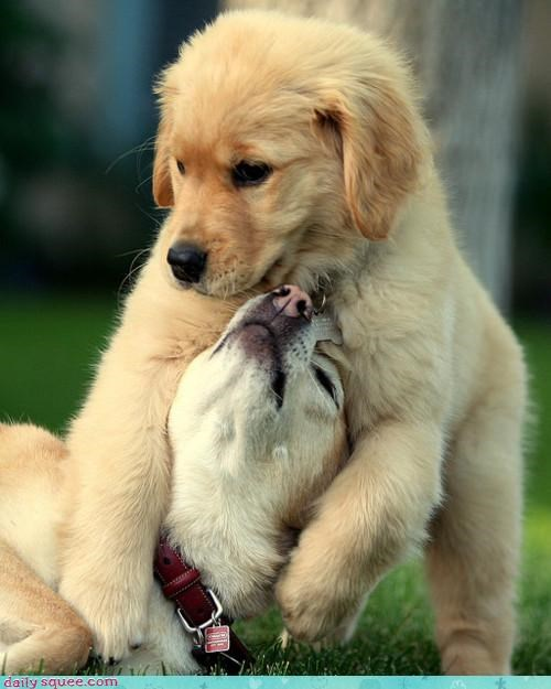 do want dogs impatient labrador labradors mother noms puppy sleeping wake up