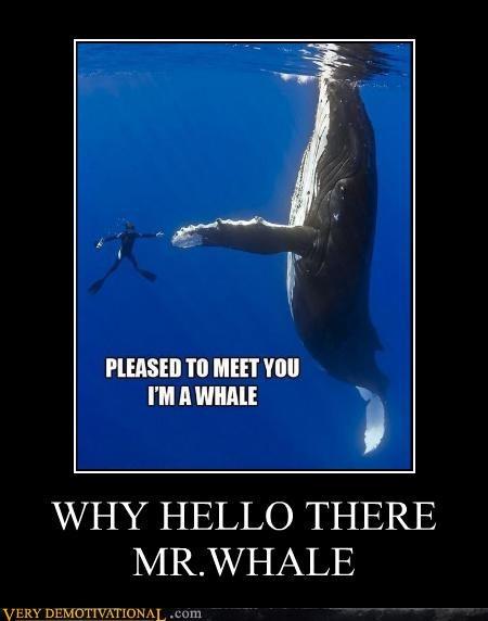 greetings hello high five shake hands whale - 4656400896