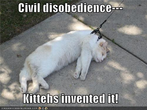 Civil disobedience--- Kittehs invented it!