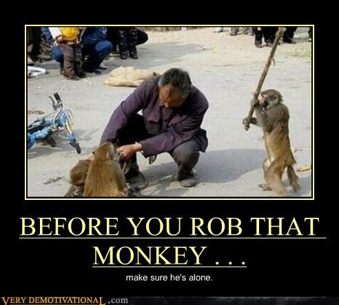 BEFORE YOU ROB THAT MONKEY . . . make sure he's alone.