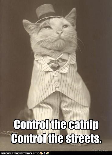 animal cat funny historic lols Photo - 4656595968