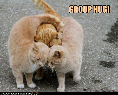 caption captioned cat Cats group group hug Hall of Fame hug hugging tabbies tabby - 4656633856