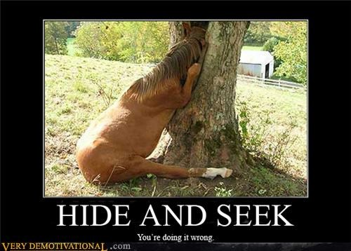 animals hide and seek horse