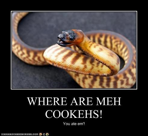 WHERE ARE MEH COOKEHS! You ate em'!