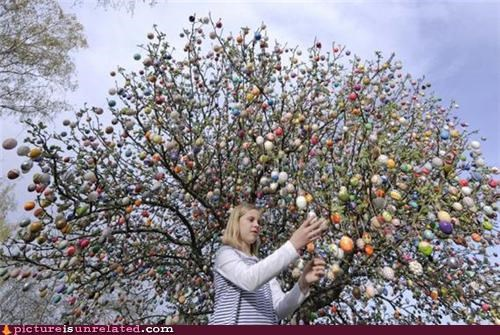 eggs girl nature tree wtf - 4658183424