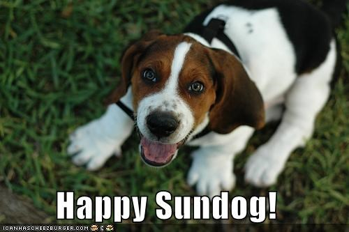beagle,grass,harness,smile,Sundog