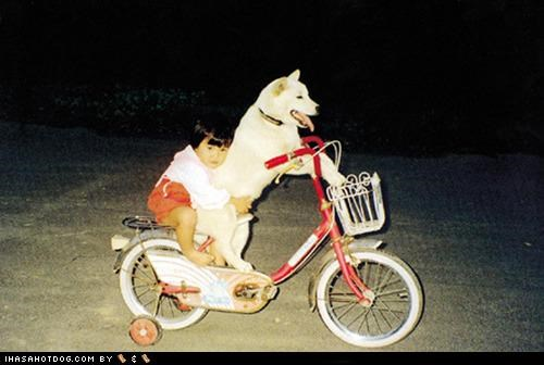 bike,dogs,kid,pedal,ride,whatbreed