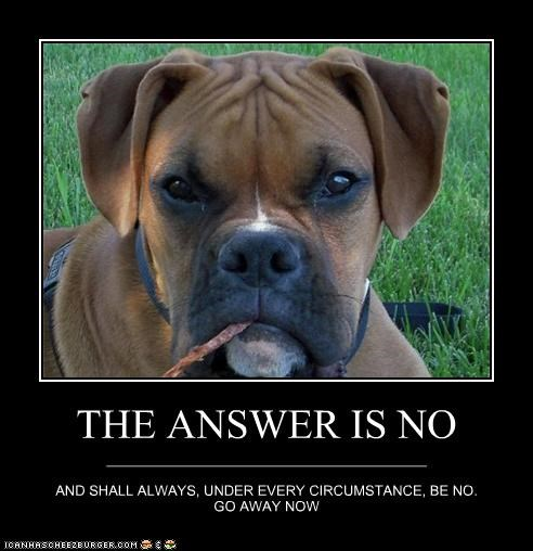 always answer boxer Command go away mixed breed no now puppy under - 4658494464