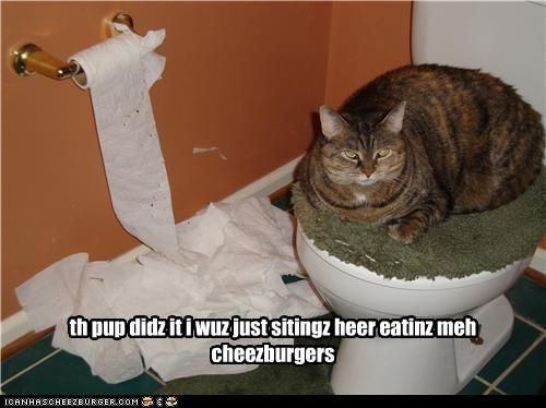 Cheezburger Image 4658873344