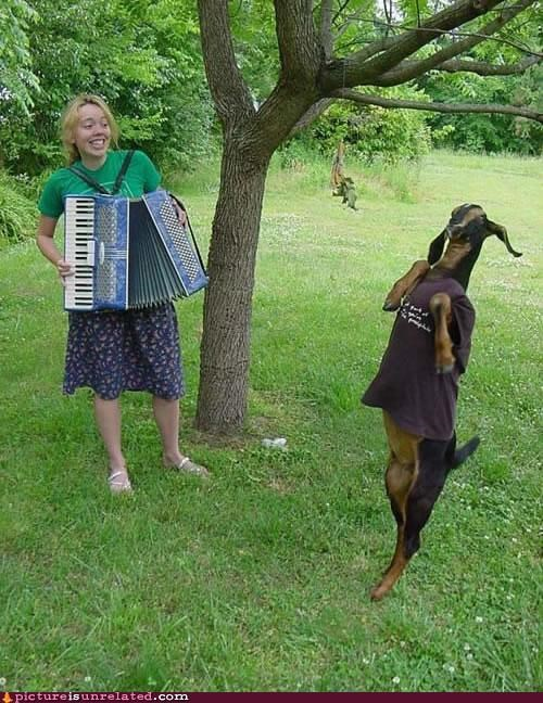 accordion,animals,goat,rock