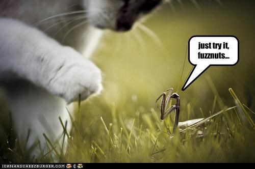 caption,captioned,cat,praying mantis,taunt,taunting,threat,try it