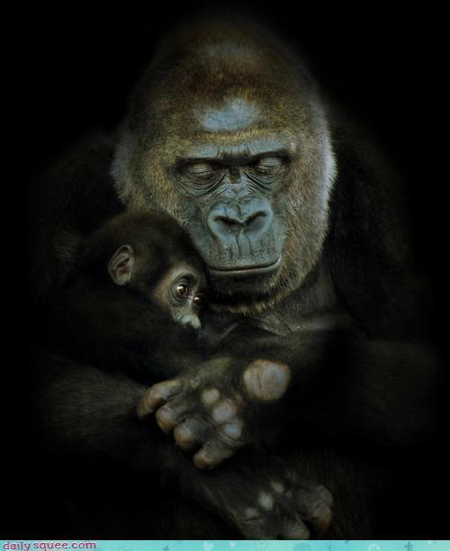antidote baby bad cuddling cure dream gorilla gorillas nightmare protection snuggling - 4659359744