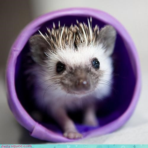 baby best ever hedgehog itty bitty pun tiny tube - 4659398400