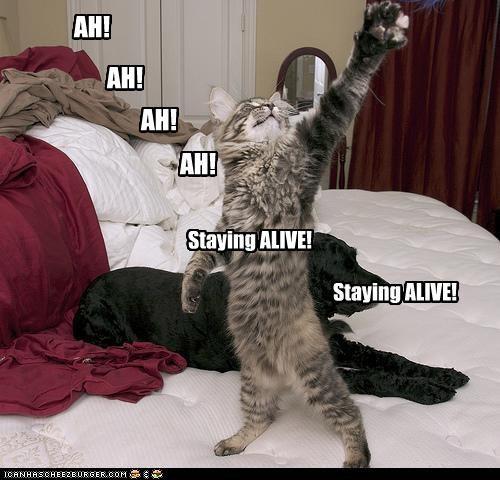AH! AH! AH! AH! Staying ALIVE! Staying ALIVE!