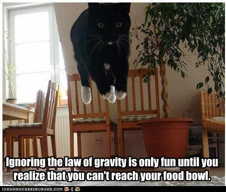bowl cant caption captioned cat caveat floating food fun Gravity ignoring law Reach realization until - 4659893760