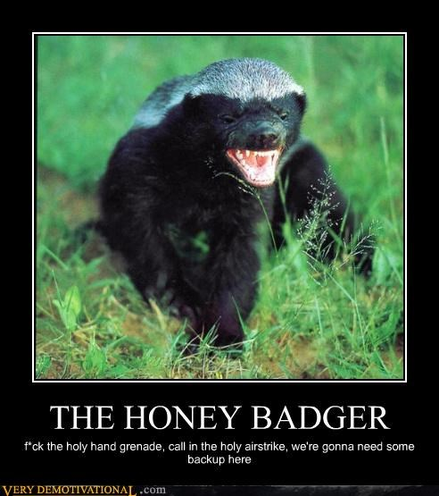 crazy dont-care honey badger - 4660357632
