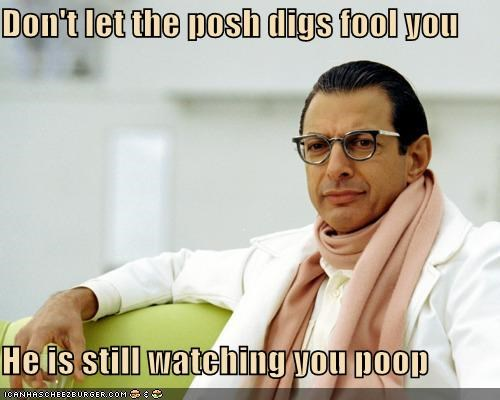 actor,celeb,funny,jeff goldblum