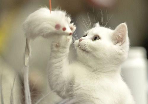 aww cute animals - 4661253