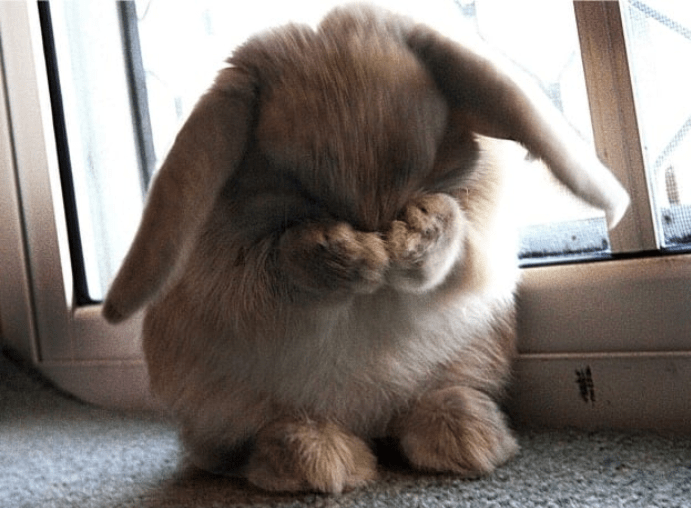 shy animals cute | cute rabbit covering its eyes