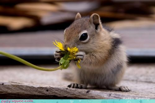 acting like animals,adage,confused,contradiction,Flower,flowers,smell,sniffing,squirrel